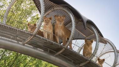 Philadelphia Zoo Lions